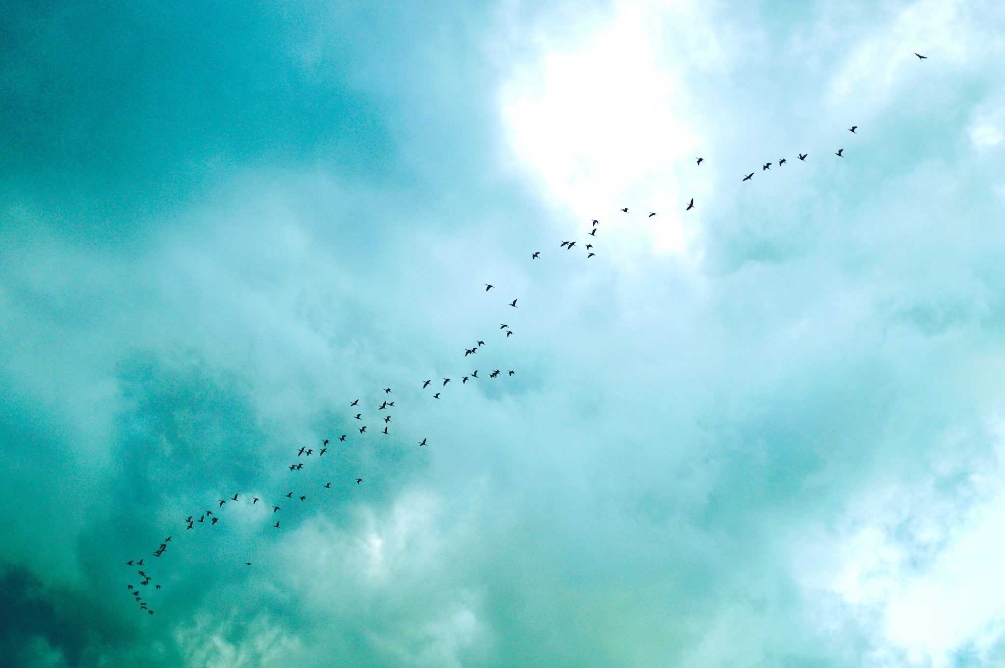 Birds Flying in a Turquoise Sky