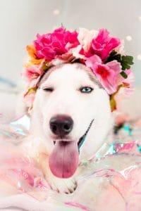 Fabulous Dog